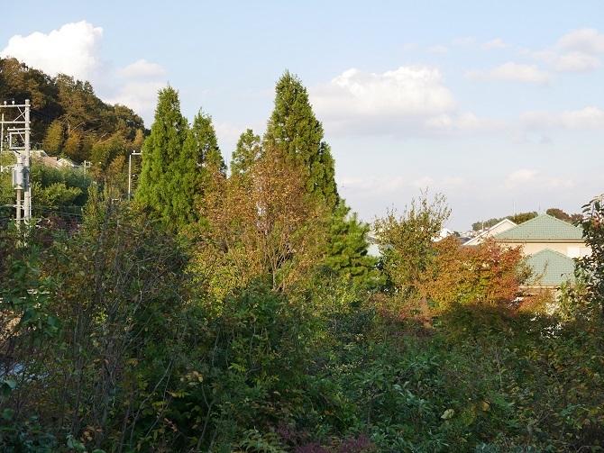 ミラーレスで撮影した風景(単焦点)